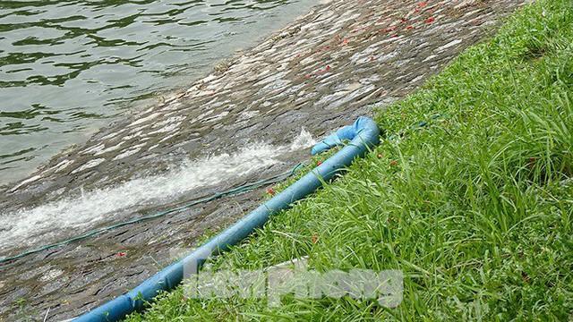 Nước sông Tô Lịch trong veo sau bão, cần thủ thỏa sức buông câu bắt cá - Ảnh 16.