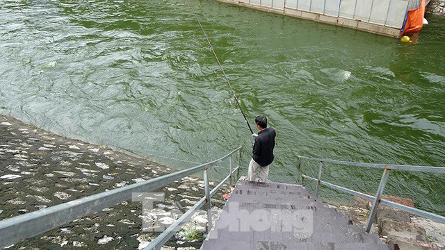 Nước sông Tô Lịch trong veo sau bão, cần thủ thỏa sức buông câu bắt cá - Ảnh 3.