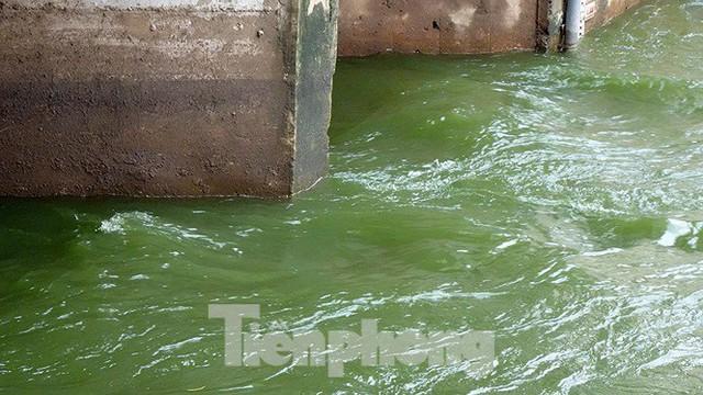 Nước sông Tô Lịch trong veo sau bão, cần thủ thỏa sức buông câu bắt cá - Ảnh 9.