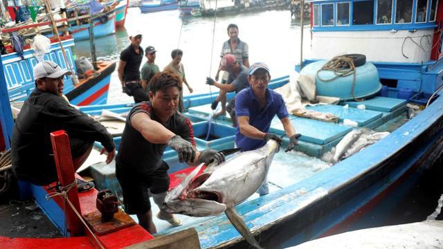 Nhiều chủ tàu cá ở Nam Trung bộ bị ngân hàng kiện đòi nợ - Ảnh 2.