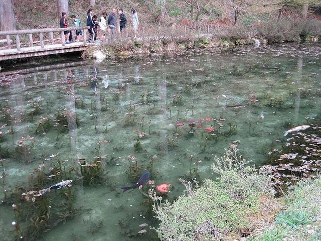 Hồ Nhật Bản đẹp như tranh sơn dầu của Monet: 20 năm trước vô danh, không ai biết đến, giờ thành địa điểm hút khách bậc nhất xứ hoa anh đào - Ảnh 2.