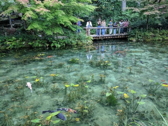 Hồ Nhật Bản đẹp như tranh sơn dầu của Monet: 20 năm trước vô danh, không ai biết đến, giờ thành địa điểm hút khách bậc nhất xứ hoa anh đào - Ảnh 3.