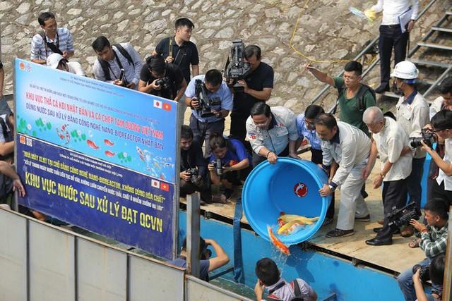 Clip: Thả 100 con cá Koi Nhật Bản xuống đoạn sông Tô Lịch làm sạch và Hồ Tây  - Ảnh 5.