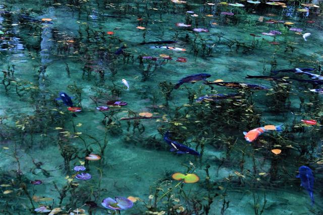 Hồ Nhật Bản đẹp như tranh sơn dầu của Monet: 20 năm trước vô danh, không ai biết đến, giờ thành địa điểm hút khách bậc nhất xứ hoa anh đào - Ảnh 5.