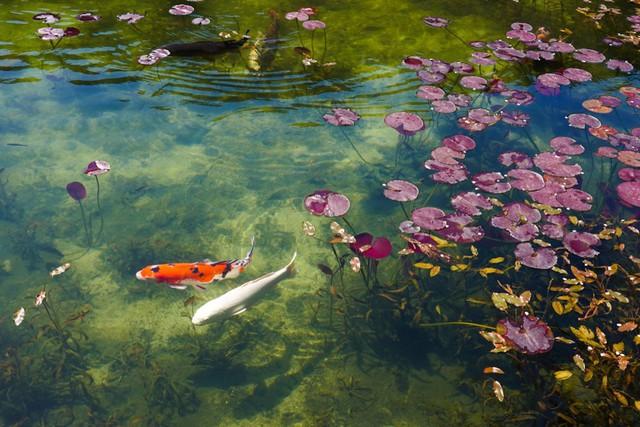 Hồ Nhật Bản đẹp như tranh sơn dầu của Monet: 20 năm trước vô danh, không ai biết đến, giờ thành địa điểm hút khách bậc nhất xứ hoa anh đào - Ảnh 6.