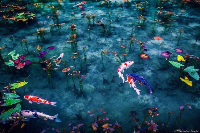 Hồ Nhật Bản đẹp như tranh sơn dầu của Monet: 20 năm trước vô danh, không ai biết đến, giờ thành địa điểm hút khách bậc nhất xứ hoa anh đào - Ảnh 7.