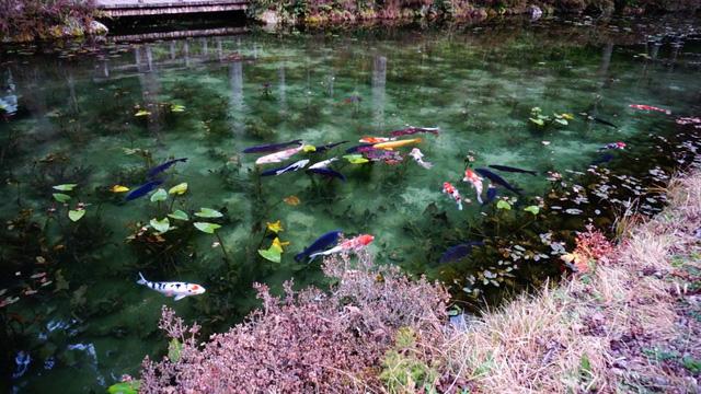 Hồ Nhật Bản đẹp như tranh sơn dầu của Monet: 20 năm trước vô danh, không ai biết đến, giờ thành địa điểm hút khách bậc nhất xứ hoa anh đào - Ảnh 9.