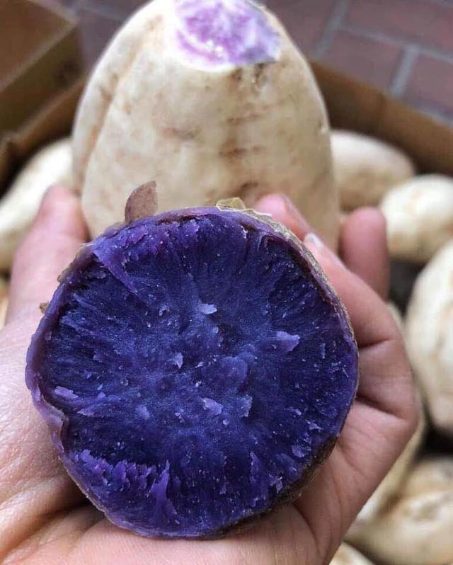 Bất ngờ củ khoai lang ruột màu tím lịm giá đắt gấp 20 lần - Ảnh 1.