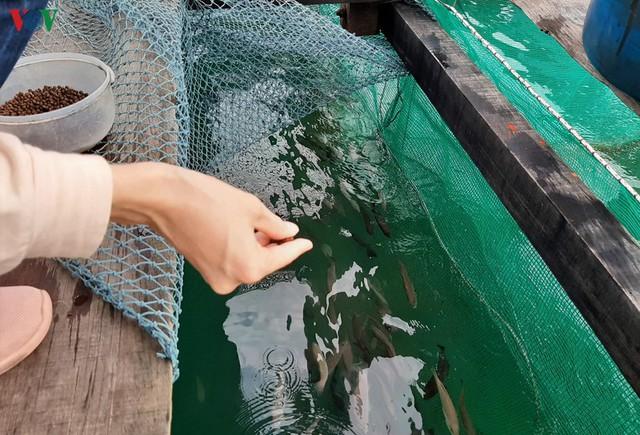 Khám phá nghề nuôi cá lồng bè thu tiền tỷ ở Nam Du - Ảnh 8.