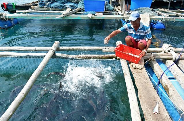Khám phá nghề nuôi cá lồng bè thu tiền tỷ ở Nam Du - Ảnh 9.