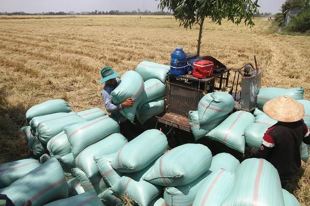 Việt Nam gần như mất thị trường gạo Trung Quốc - Ảnh 1.