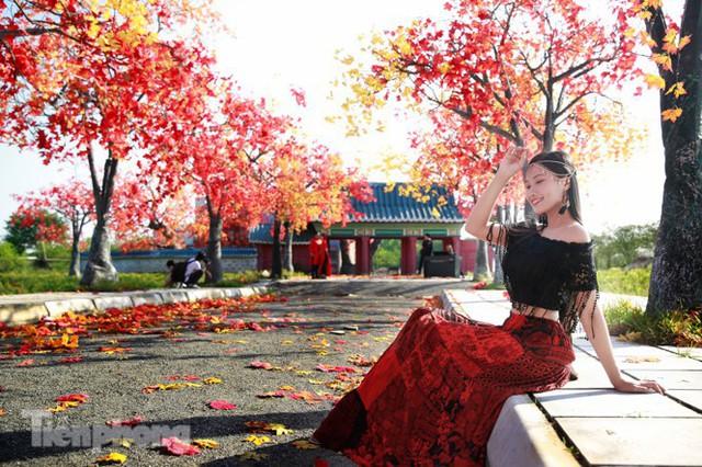 Ngỡ ngàng với con đường phong lá đỏ ở Hà Nội - Ảnh 10.