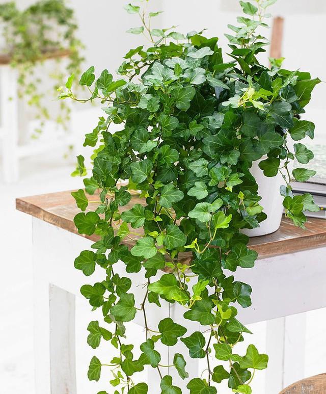 Bạn khỏi cần sợ không khí ô nhiễm khi biết trồng 1 trong 15 loại cây này trong nhà - Ảnh 12.
