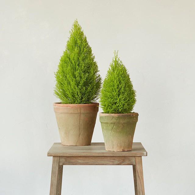 Bạn khỏi cần sợ không khí ô nhiễm khi biết trồng 1 trong 15 loại cây này trong nhà - Ảnh 14.