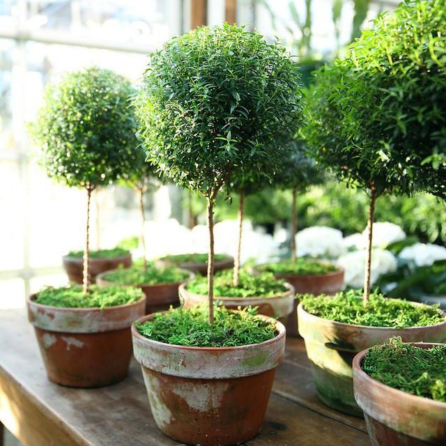 Bạn khỏi cần sợ không khí ô nhiễm khi biết trồng 1 trong 15 loại cây này trong nhà - Ảnh 15.