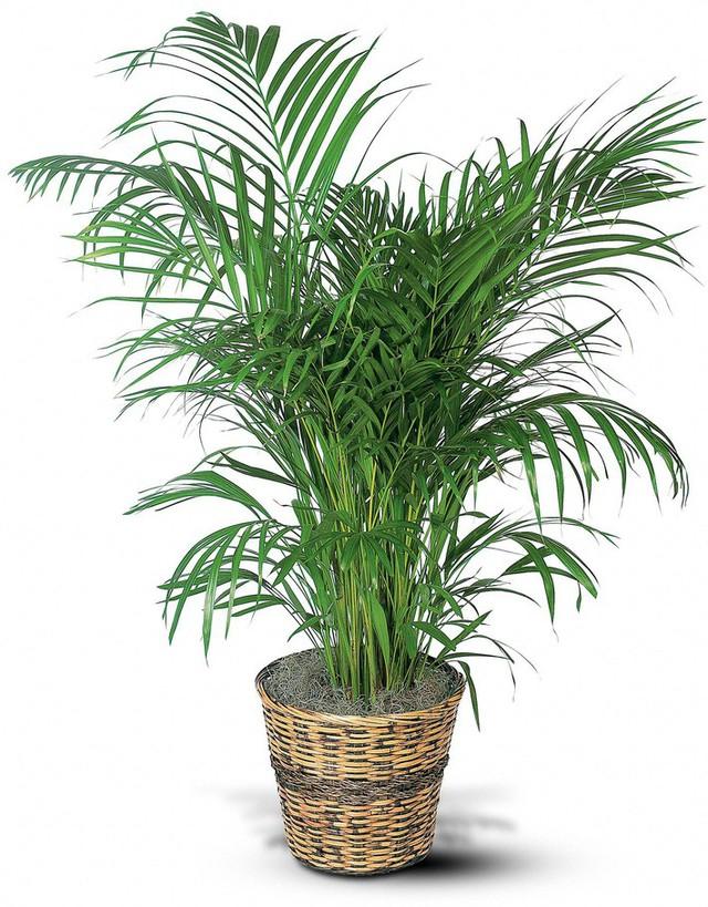 Bạn khỏi cần sợ không khí ô nhiễm khi biết trồng 1 trong 15 loại cây này trong nhà - Ảnh 5.