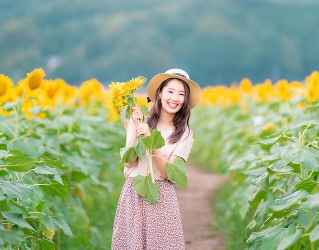 """""""Choáng váng"""" với cánh đồng hoa hướng dương triệu bông đẹp như bức tranh khổng lồ vào mùa thu ở Nhật Bản - Ảnh 5."""