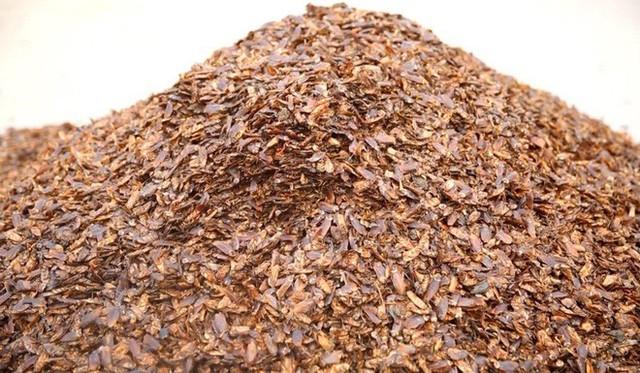 Loài côn trùng nhiều người ghê tởm đang lên ngôi ở Trung Quốc: Hàng loạt trang trại nuôi gián mọc lên như nấm để chế biến thuốc, xử lý thực phẩm thừa và dùng làm nguồn thức ăn cho 1,4 tỷ dân - Ảnh 3.