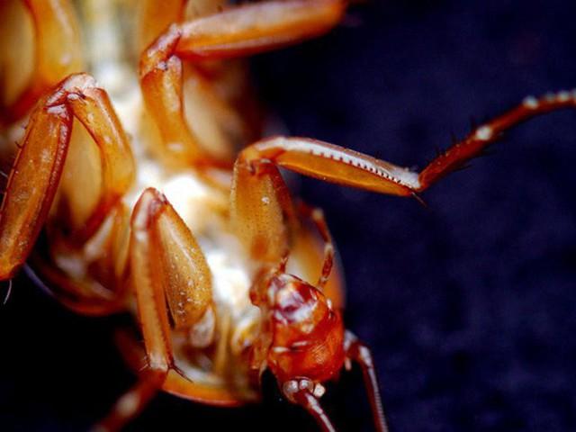 Loài côn trùng nhiều người ghê tởm đang lên ngôi ở Trung Quốc: Hàng loạt trang trại nuôi gián mọc lên như nấm để chế biến thuốc, xử lý thực phẩm thừa và dùng làm nguồn thức ăn cho 1,4 tỷ dân - Ảnh 8.