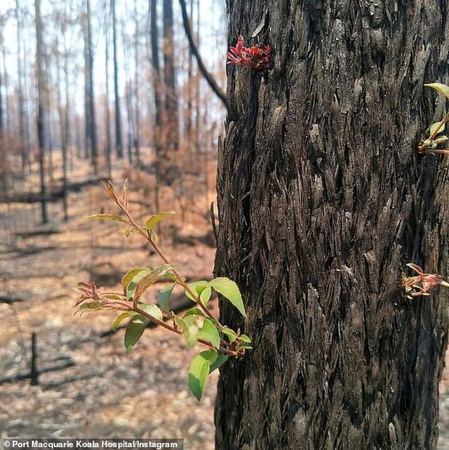 Phượng hoàng lửa tái sinh từ đống tro tàn: Những mầm sống vươn mình tại nơi hứng chịu sự càn quét của thảm họa cháy rừng - Ảnh 5.