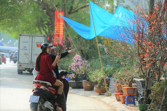 Vượt 300km về Hà Nội, đào rừng không lá không hoa hét giá khó tin gần 200 triệu đồng - Ảnh 9.