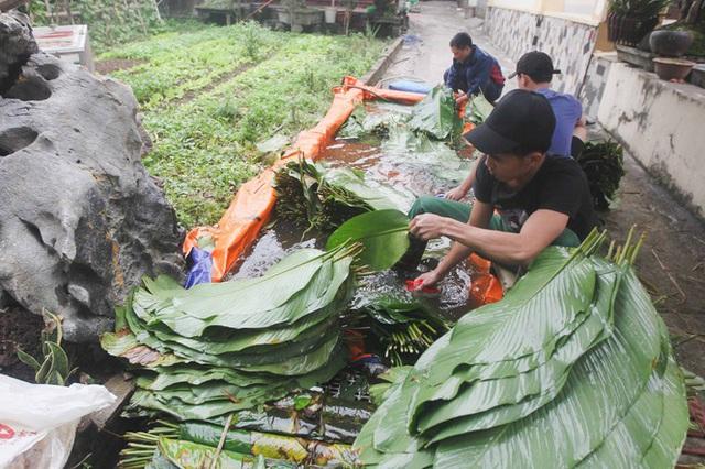 Nghề rửa lá dong hái ra tiền ở công xưởng bánh chưng lớn nhất miền Bắc - Ảnh 1.