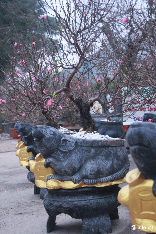 Chuột cưỡi hũ vàng, cõng đào, quất Nhật Tân hút khách - Ảnh 4.