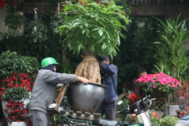 Mặc thời tiết mưa rét, người dân chen chân mua hoa Tết tại chợ hoa lâu đời nhất Hà Nội - Ảnh 11.