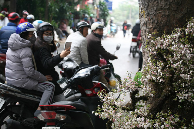 Mặc thời tiết mưa rét, người dân chen chân mua hoa Tết tại chợ hoa lâu đời nhất Hà Nội - Ảnh 6.