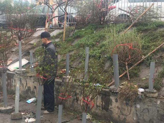 Chiều 30 Tết: Đào đại hạ giá 50.000 đồng/cành vẫn vắng bóng người mua, tiểu thương ngậm ngùi vứt lên xe rác - Ảnh 4.