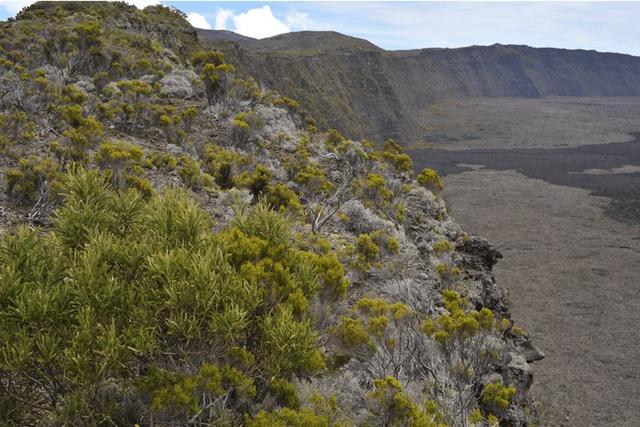 Số phận bi thảm của 10 loài thực vật mới phát hiện năm 2019  - Ảnh 9.