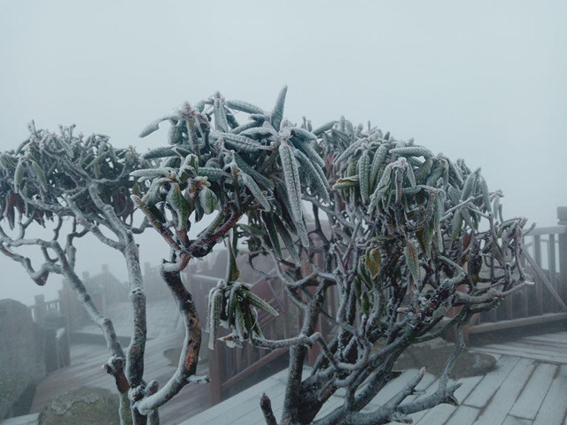 Mùng 3 tết băng tuyết phủ khắp nơi, Fansipan đẹp tựa châu Âu - Ảnh 2.