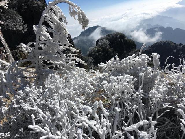 Mùng 3 tết băng tuyết phủ khắp nơi, Fansipan đẹp tựa châu Âu - Ảnh 3.