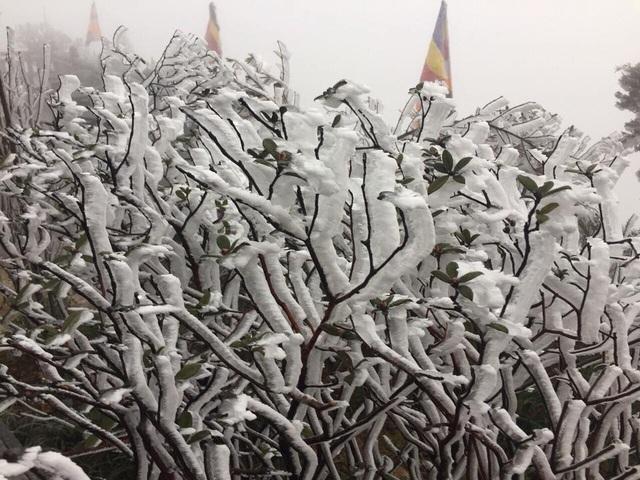 Mùng 3 tết băng tuyết phủ khắp nơi, Fansipan đẹp tựa châu Âu - Ảnh 4.