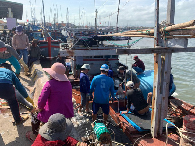 Ngư dân Phú Yên mỏi tay khiêng cá ngừ đại dương - Ảnh 5.
