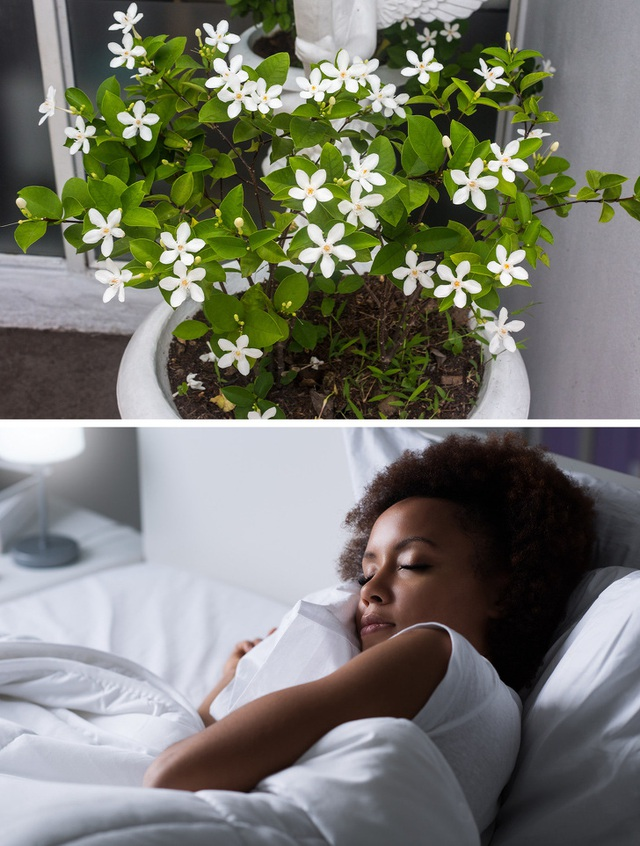 Không chỉ mang ý nghĩa phong thủy, trang trí căn phòng, những loại cây dưới đây còn giúp lọc sạch không khí, cải thiện sức khỏe - Ảnh 1.