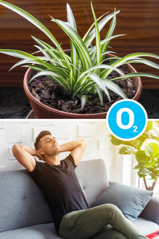 Không chỉ mang ý nghĩa phong thủy, trang trí căn phòng, những loại cây dưới đây còn giúp lọc sạch không khí, cải thiện sức khỏe - Ảnh 2.