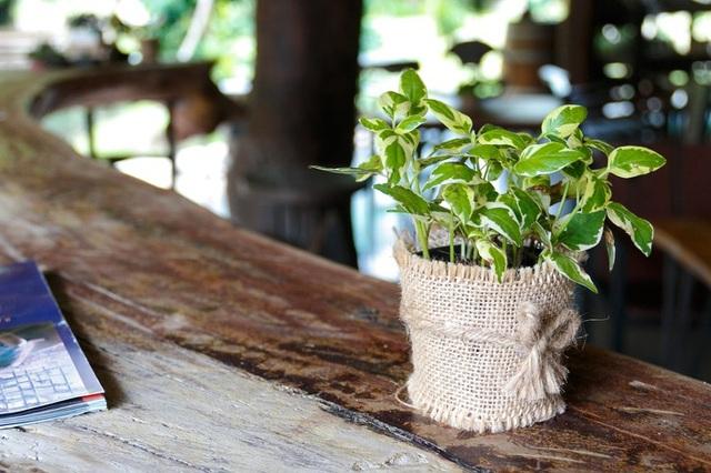Không chỉ mang ý nghĩa phong thủy, trang trí căn phòng, những loại cây dưới đây còn giúp lọc sạch không khí, cải thiện sức khỏe - Ảnh 9.