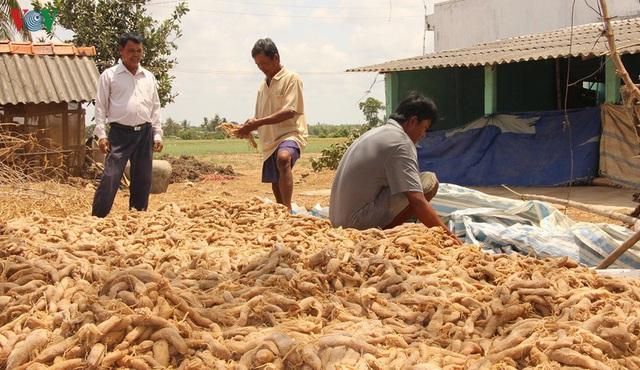 Đồng bào Khmer kiếm thu nhập khá từ trồng củ cải trắng làm xá pấu - Ảnh 9.