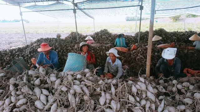 Nông sản Việt mất đường sang Trung Quốc vì virus corona - Ảnh 1.