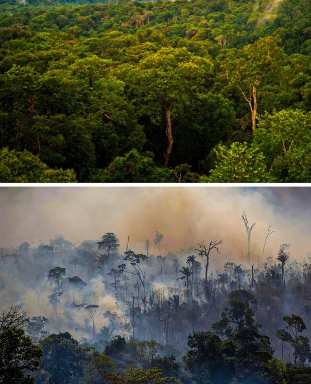 14 hình ảnh chứng minh biến đổi khí hậu là có thật và nó đang xảy ra: Xin đừng nhắm mắt chối bỏ nữa - Ảnh 12.