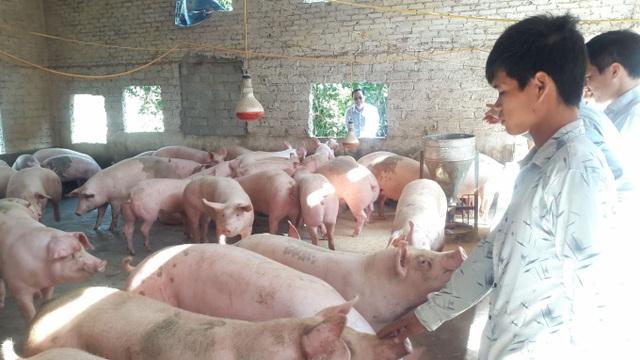 Giá gia cầm dần phục hồi, giá lợn đã bớt cao - Ảnh 3.