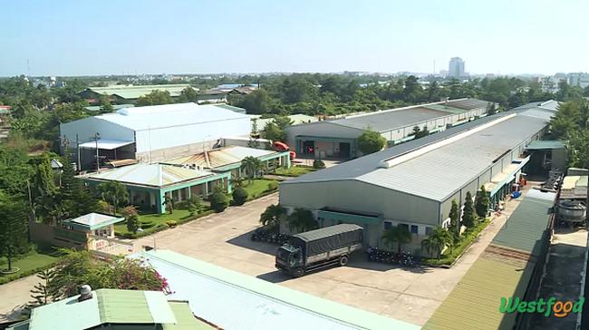 Inside Factory: Thăm nhà máy chế biến thực phẩm xuất khẩu Miền Tây của TSC