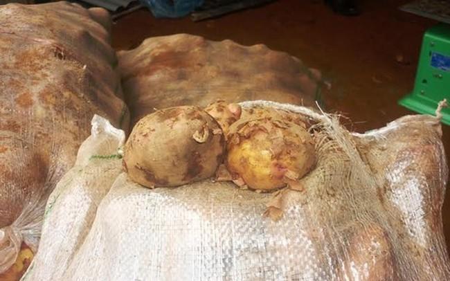 Dời lệnh cấm khoai tây Trung Quốc đến 1-11