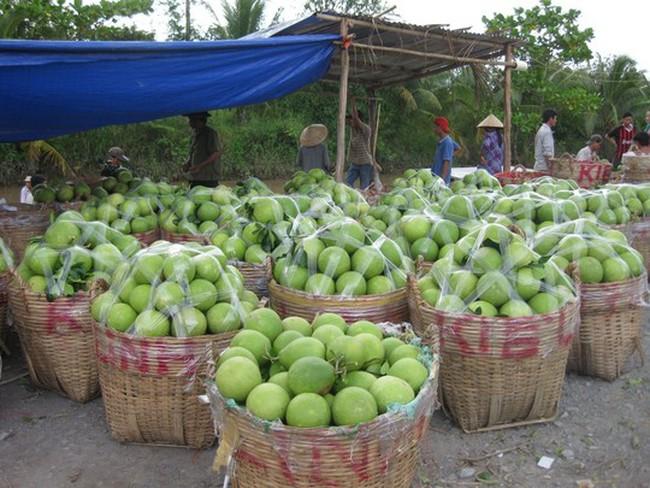 Trái cây: Giá giảm thê thảm