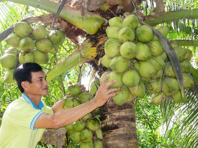 Dừa tươi, chanh tăng giá mạnh