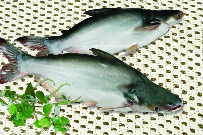 Anvifish: Lỗ năm 2014 lên tới 913 tỷ đồng, hé lộ nhiều bất ổn
