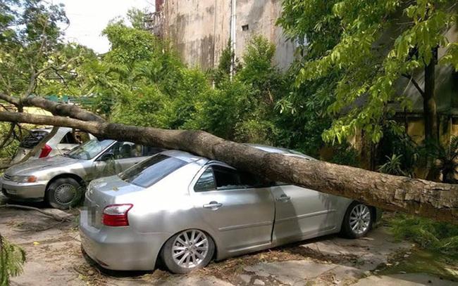 Hà Nội: 4,6 tỷ đồng thiệt hại do mưa giông được chi trả bảo hiểm