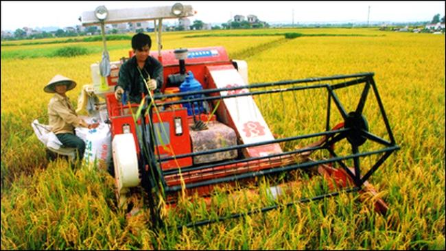 Tái cơ cấu toàn bộ chuỗi giá trị ngành lúa gạo Việt Nam