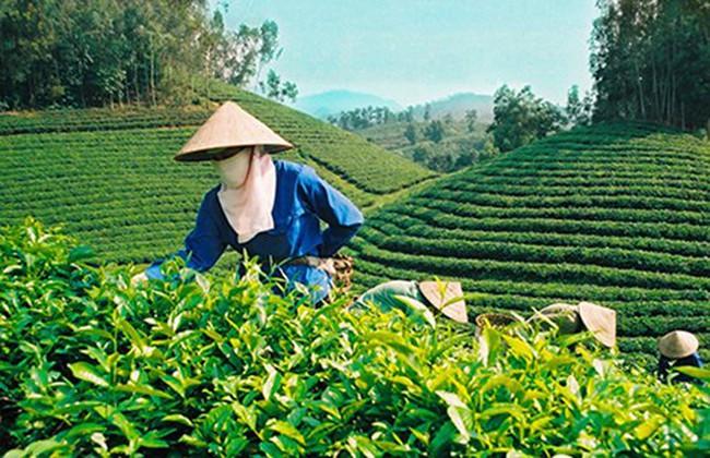 """Diễn đàn Kinh tế mùa Thu: Nông nghiệp có """"cửa"""" với Nhật Bản trong TPP?"""